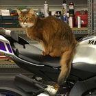 Profile picture of Speedy Cat