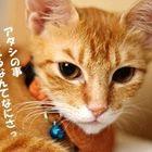 あき さんのプロフィール写真
