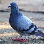 Profile picture of 鳩おじ
