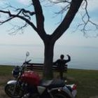 Profile picture of 琵琶湖の珍獣