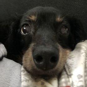 Profile picture of ポッキー