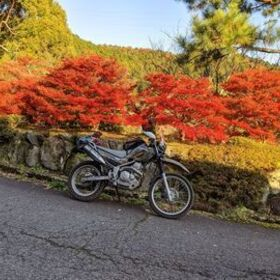 Profile picture of バイク親爺