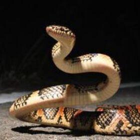 Profile picture of Hydra.inc