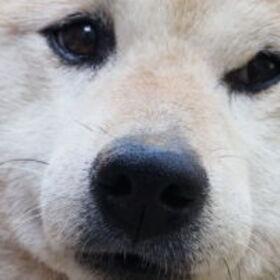 Profile picture of タカタカシ