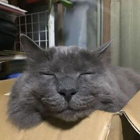 Profile picture of 精